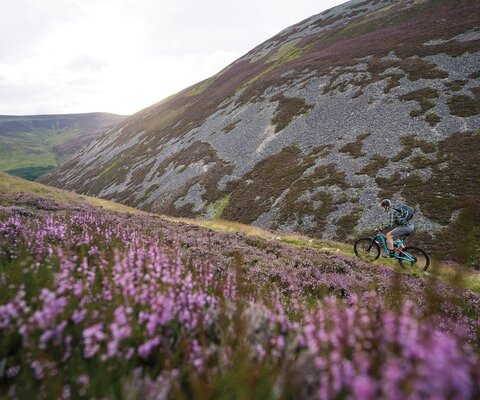 Despite their rounded relief, the Central Cairngorm Mountains can be surprisingly treacherous - they're home to the highest points in Scotland, as well as its snowiest and coldest temperatures. But when the light is right and the heather is in bloom, they're absolutely enchanting.