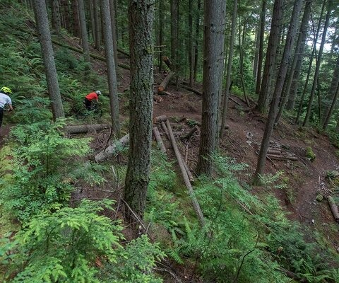 Flowing through ferns, Nick Parent and Matt Russell dive through sweeping turns on Blanchard Mountain.